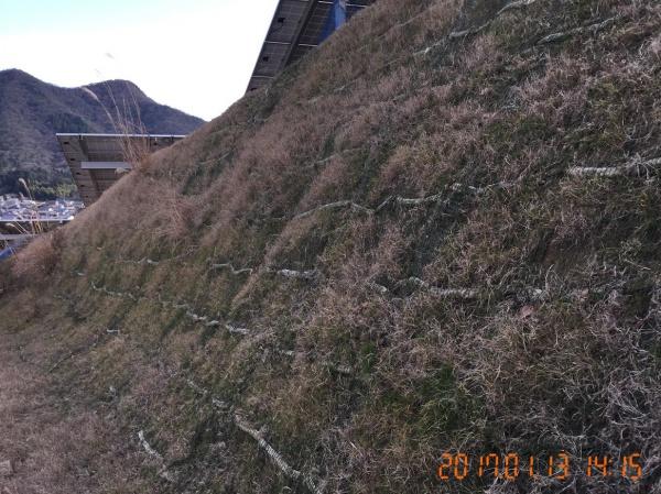 法面を保護する植生マットの施工例